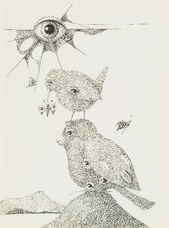 81. Ptaki